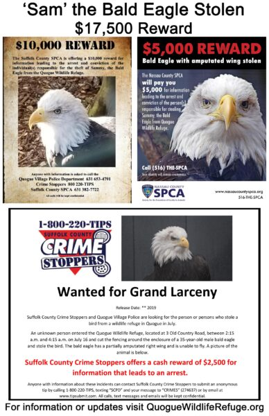 Bald Eagle Reward Poster