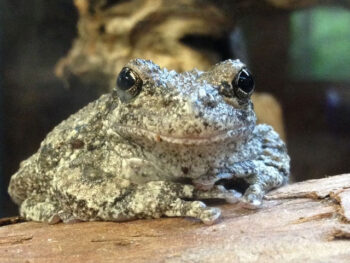 Frog and Toads