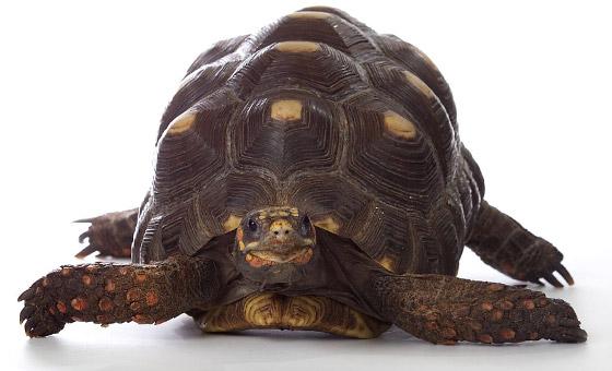 Tortoise ©Kevin Feris