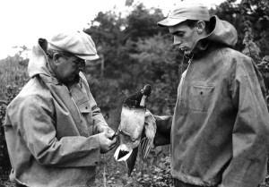 banding a duck