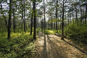 Guided History Tour & 1 Mile Nature Hike (Social Distance Program)