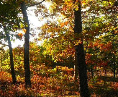 Autumn Reflections on Nature - Poems and Short Readings for the Entire Family