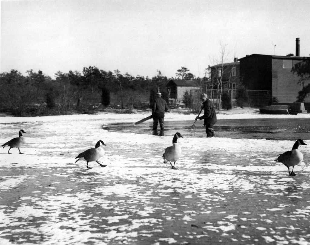 Ice Harvest with Geese