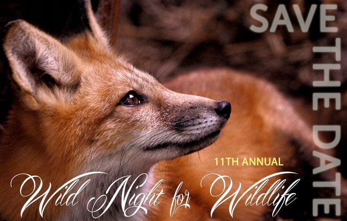 Wild Night for Wildlife 2017