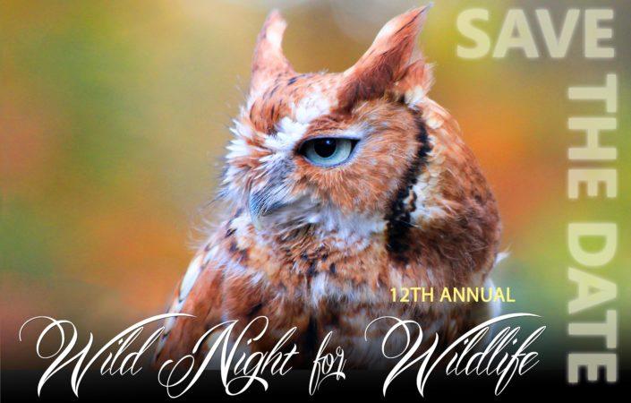 Wild Night for Wildlife 2018