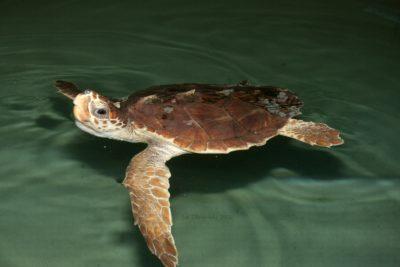Sea Turtle Lecture