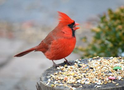 Annual Seed Sale Fundraiser @ Quogue Wildlife Refuge | Quogue | New York | United States