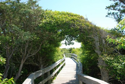 Guided Adventure Day - Sunken Forest, Fire Island