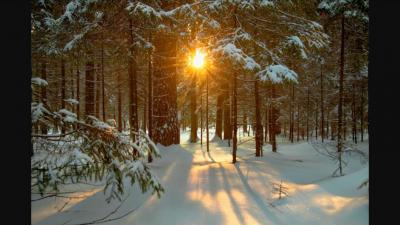 Winter Solstice Walk @ Quogue Wildlife Refuge   Quogue   New York   United States