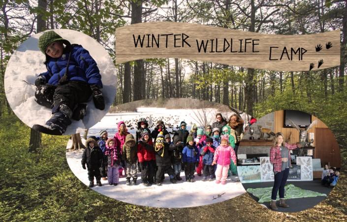 Winter Wildlife Camp