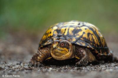 PROGRAM FULL Celebrate World Turtle Day (R)