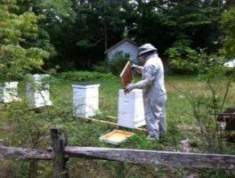 Bee Hives at QWR