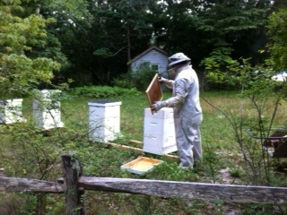 Bee Hives at QWR