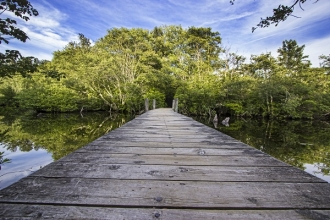 Robert-Seifert-low-view-bridge