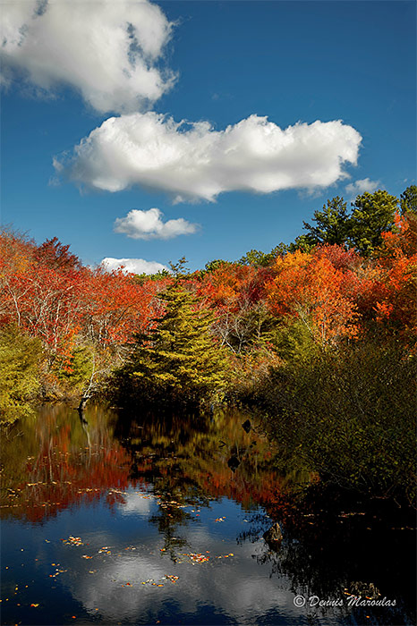 qwr-autumn-pine
