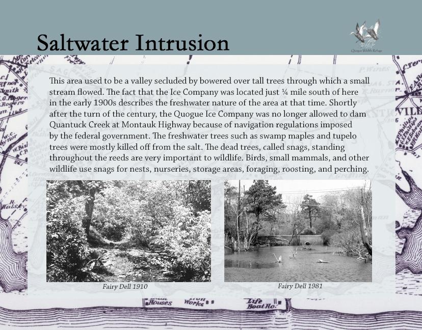 7 FairyDellHistory_SaltwaterIntrusion