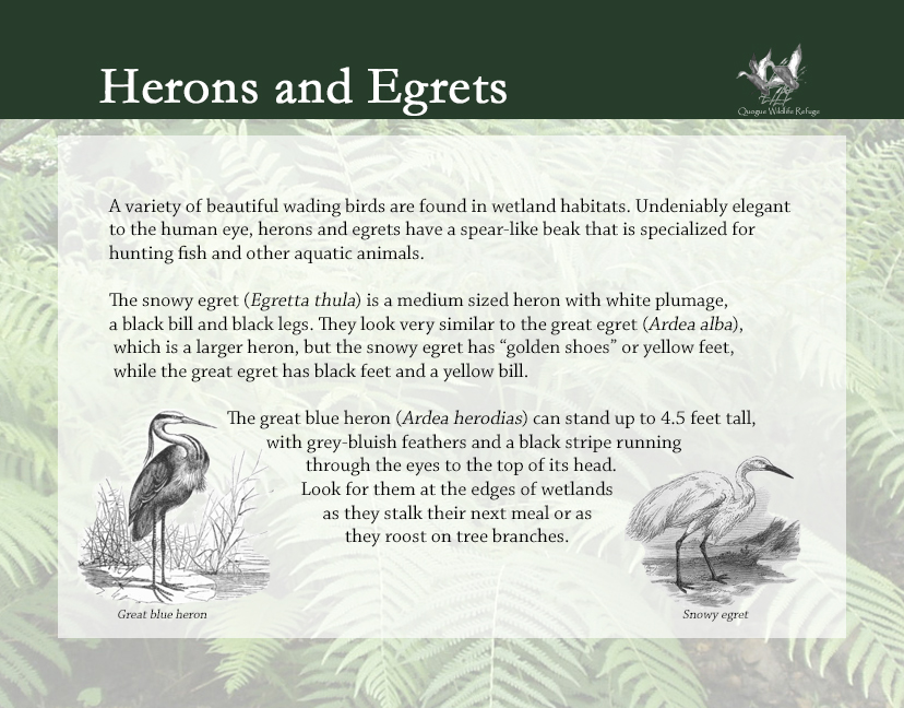 Flora and Fauna - Herons and Egrets