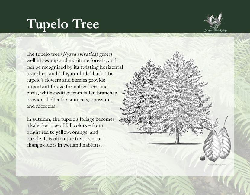 Flora and Fauna - Tupelo