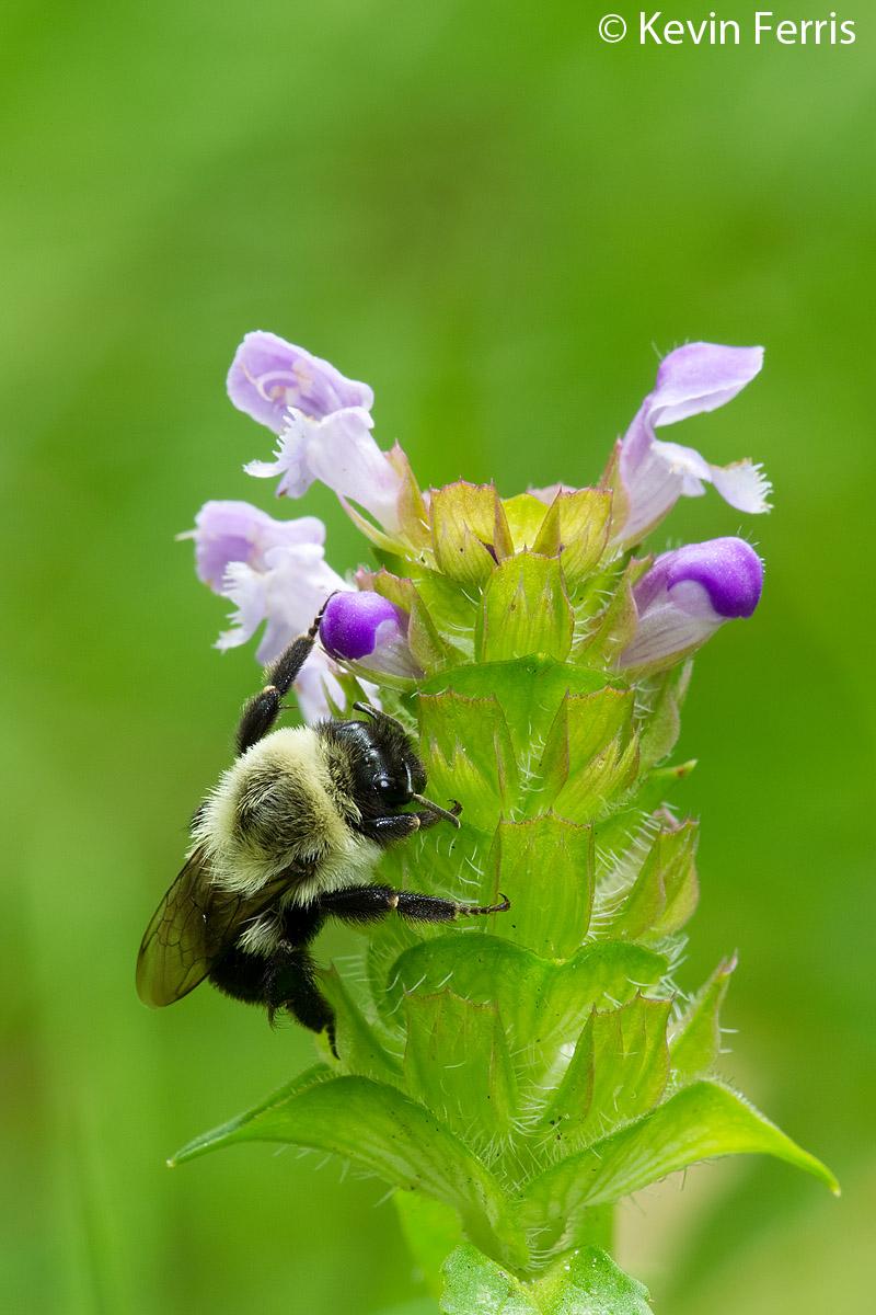 Pollinator-Program-1