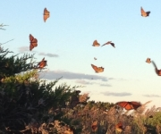 Meghan-Tria-butterflies-in-flight