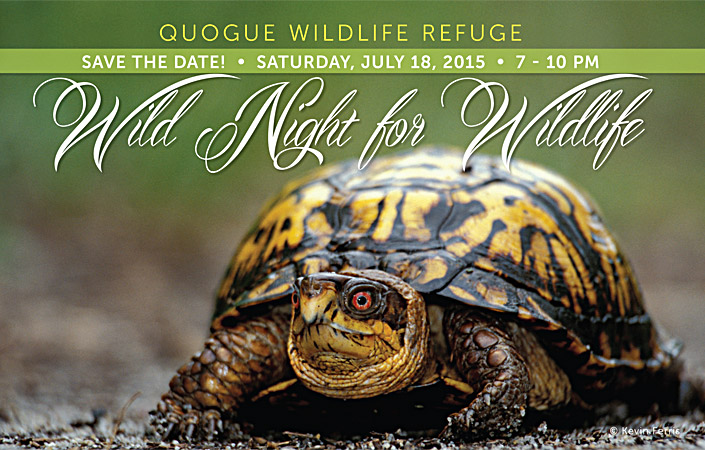 Wild Night for Wildlife 2015