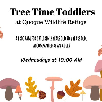 Tree Time Toddlers